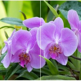 """ФотоШторы """"Орхидеи"""""""
