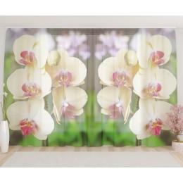 """ФотоТюль широкий """"Желтые орхидеи"""""""