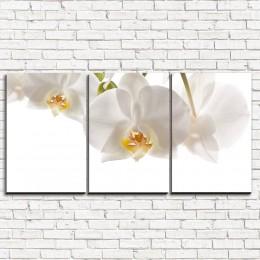 """Модульная картина """"Белые орхидеи 3-1"""""""