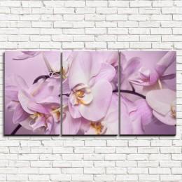 """Модульная картина """"Божественная орхидея 3-1"""""""