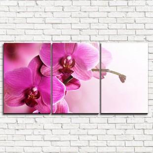 """Модульная картина """"Нежнейшая орхидея 3-1"""""""