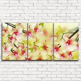 """Модульная картина """"Воздушная орхидея 3-1"""""""